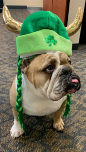 Did you know Louis is part Irish? The more pets you give him the luckier you become!