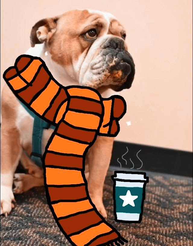 Louis is excited for the fall season ahead. He's already enjoying his pumpkin spiced latte.